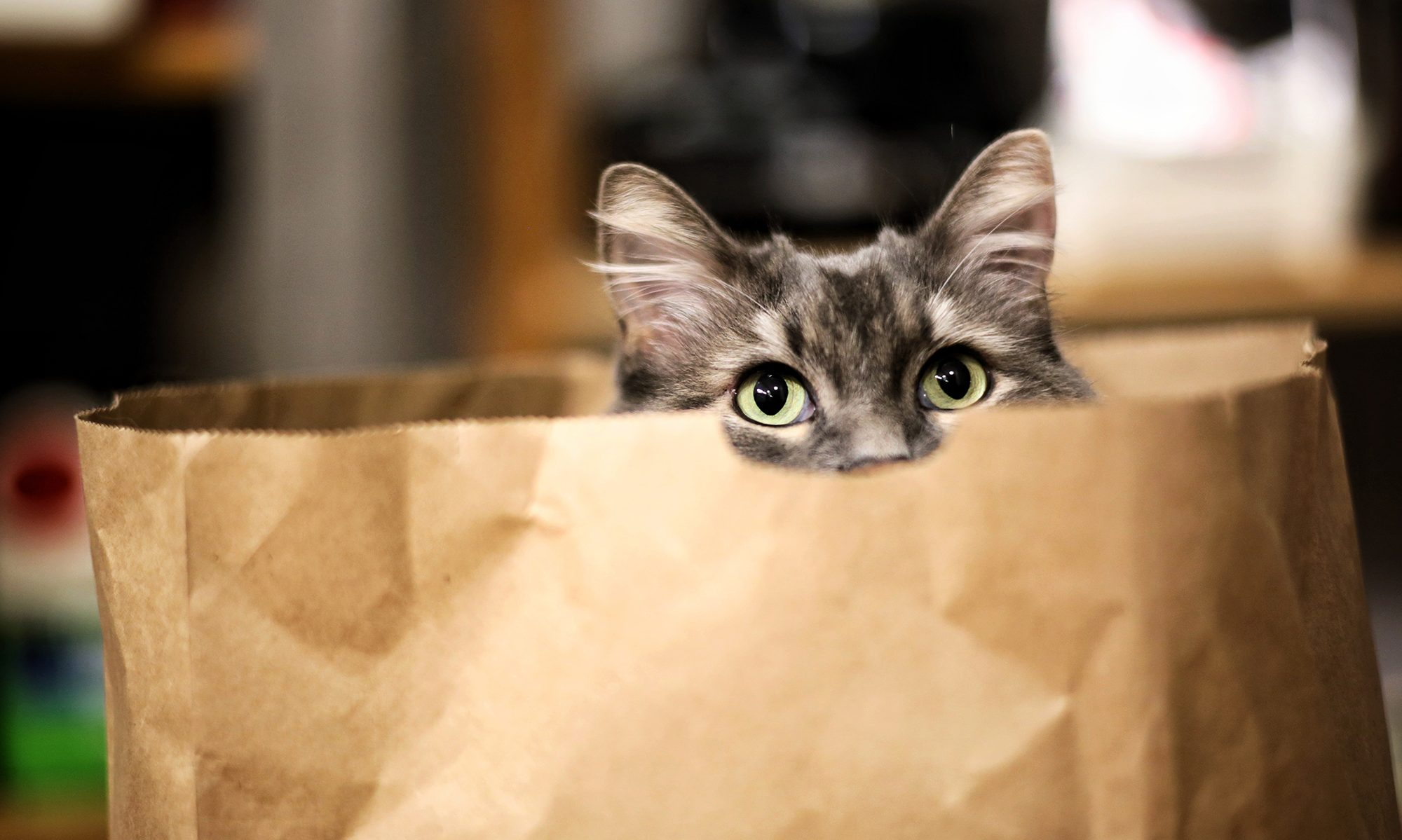 Good Bad Brands Yet Another Cat Food Guide